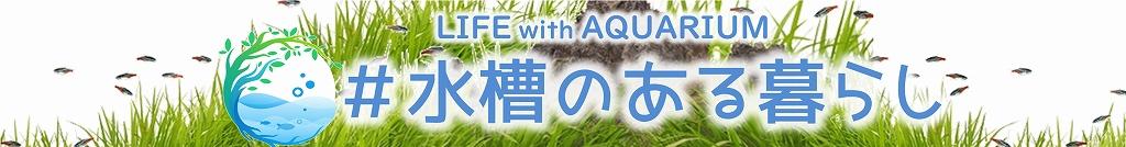#水槽のある暮らしに癒やされましょう!アクアリウムのすべての情報メディア|Life with AQUARIUM
